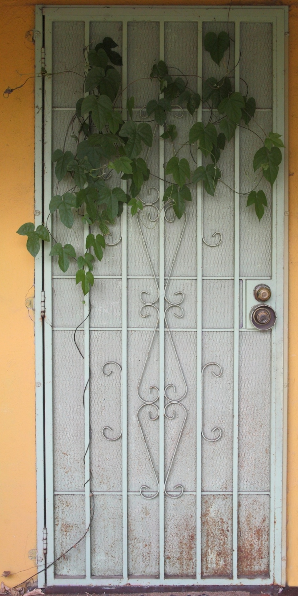 Vine door 252 28_May